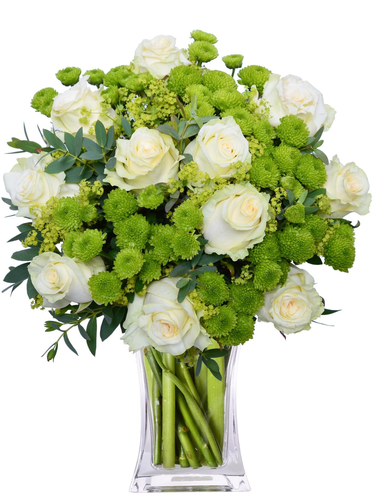 bijele ruže u sarajevu