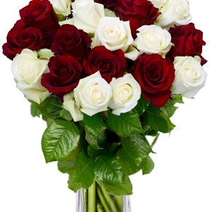 crvene i bijele ruže u Zagrebu