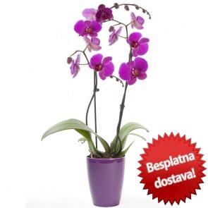 orhideja dostava u zagrebu